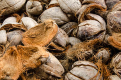 Pile of Dried Coconut Shells Royalty Free Stock Photos