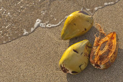 Coconut shells in tropical beach water Stock Photos