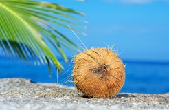 Coconut on shore Royalty Free Stock Image