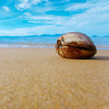 Coconut on the shore Royalty Free Stock Photography