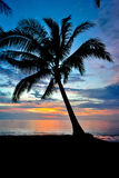 Coconut Silhouette in Sun Set. Taken during summer time while the water is calm Stock Image