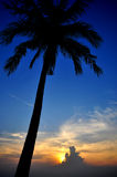Coconut Silhouette Stock Photos