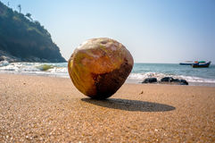 Coconut sitting on the sand with shell with sky Royalty Free Stock Image