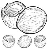 Coconut sketch. Doodle style coconut illustration in vector format. Set includes exterior and interior views of whole and cracked cocoanuts Royalty Free Stock Images
