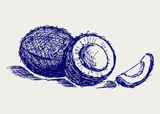 Coconut sketch. Doodle style. Vector Stock Image