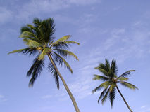 Coconut Sky Royalty Free Stock Photos