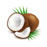Coconut and slice  on white vector Stock Photo