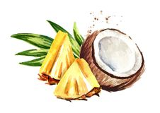 Coconut with sliced pineapple. Pina colada elements. Watercolor hand drawn illustration isolated on white background. Coconut with sliced pineapple. Pina colada stock illustration