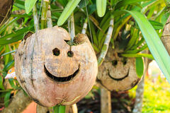 Coconut with smile face Stock Image