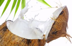 Coconut splash Stock Image