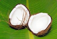 Coconut split in two. Royalty Free Stock Image
