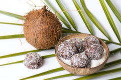 Coconut spread cookies in a shell Royalty Free Stock Image