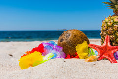 Coconut and star fish on the sand Royalty Free Stock Photography