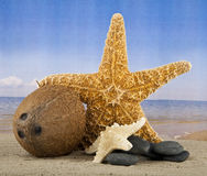 Coconut and starfish Royalty Free Stock Image