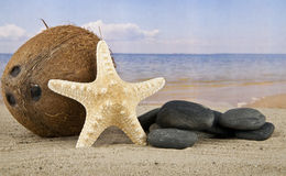Coconut and starfish Stock Photos