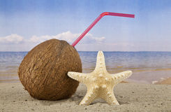 Coconut and starfish Royalty Free Stock Photo