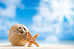 Coconut and starfish shell with sun, ocean , beach and seascape Stock Photos