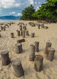Coconut stumps on beach prepared for night party, Samui, Thailan Royalty Free Stock Image
