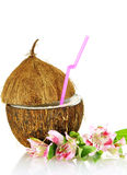 Coconut stylized as glass for coctail Stock Photos