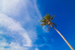 Coconut Sunshine Palms Stock Image