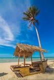 Coconut Sunshine Palms Stock Photo