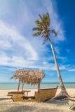 Coconut Sunshine Palms Stock Images