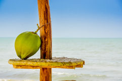 Coconut on a table hut with the sea in background Royalty Free Stock Photo