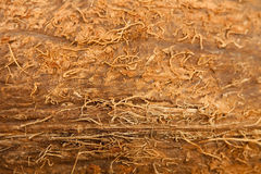 Coconut texture Stock Images