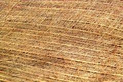 Coconut texture Stock Image