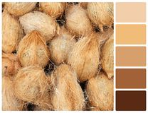 Coconut texture with palette color swatches Royalty Free Stock Image