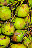 Coconut In thailand Royalty Free Stock Photos