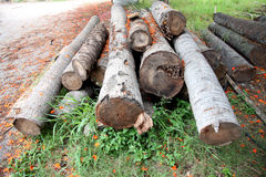 Coconut Timber stack together. Stock Image