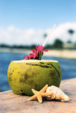 Coconut time Royalty Free Stock Images