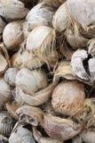Coconut trash Stock Photography