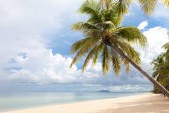Coconut Tree. On the Beach, Thailand Stock Photography