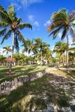 Coconut tree. Cayo Guillermo. Cuba Stock Photography