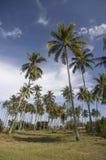 Coconut tree. Beautiful coconut tree with blue sky royalty free stock photos