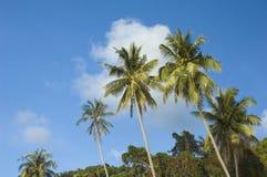 Coconut tree. A photo of coconut tree with blue sky royalty free stock photos