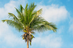 Coconut tree. On blue sky and clound Stock Photos