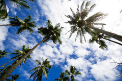 Coconut tree. And blue sky Royalty Free Stock Images