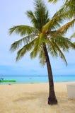 Coconut tree. On the beach Royalty Free Stock Photo