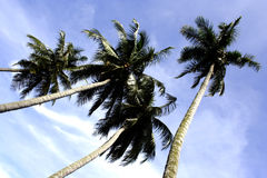 Coconut tree. At the beach againts cloudy skies Royalty Free Stock Photography
