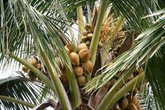 Coconut tree. Very close up Stock Photo