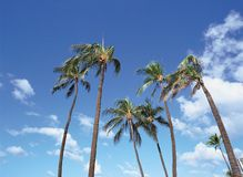 Coconut Tree. Tropical Landscape stock photography