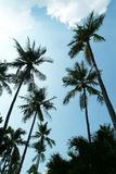 Coconut Tree. Tropical Landscape royalty free stock photography