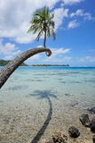 Coconut tree above shallow water French Polynesia Royalty Free Stock Images