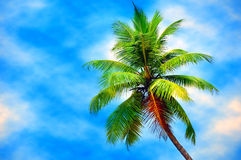 Coconut tree against blue sky Royalty Free Stock Image