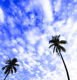 Coconut tree against brilliant blue sky. With clouds royalty free stock photos