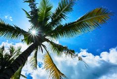 Coconut tree against sun rays and beautiful blue sky in summer season. Stock Photography
