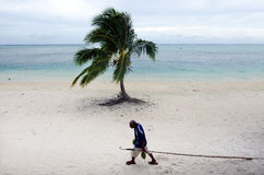 Coconut Tree Agriculture  in Aitutaki Lagoon Cook Islands Royalty Free Stock Photo